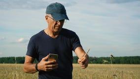 Γεωπόνος στον τομέα που μελετά τη συγκομιδή σιταριού στον τομέα μια ηλιόλουστη θερινή ημέρα απόθεμα βίντεο