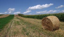 γεωργία βιώσιμη Στοκ εικόνες με δικαίωμα ελεύθερης χρήσης