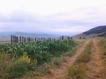Γεωργία βουνών φύσης Στοκ Εικόνες