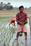 γεωργία Ινδός Στοκ Εικόνες