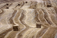 γεωργία καλλιτεχνική Στοκ εικόνα με δικαίωμα ελεύθερης χρήσης