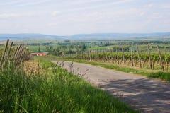 Γεωργία κρασιού στο Ρήνο -Ρήνος-hesse στην άνοιξη, Γερμανία Στοκ Φωτογραφίες
