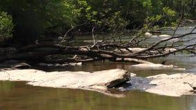 Γεωργία, πάρκο γεφυρών του Τζόουνς, νεκροί δέντρα και βράχοι στις όχθεις ποταμού ποταμών Chattahoochee απόθεμα βίντεο