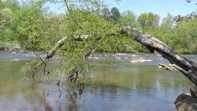 Γεωργία, πάρκο γεφυρών του Τζόουνς, σπασμένη Α ένωση δέντρων στον ποταμό Chattahoochee απόθεμα βίντεο
