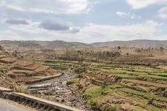 Γεωργία στη Μαδαγασκάρη Στοκ Εικόνες