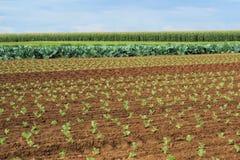 γεωργία στοκ εικόνες με δικαίωμα ελεύθερης χρήσης