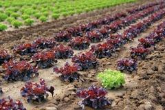 γεωργία στοκ φωτογραφίες