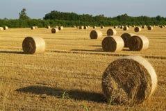γεωργία Στοκ εικόνα με δικαίωμα ελεύθερης χρήσης