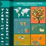 Γεωργία, infographics κτηνοτροφικής παραγωγής, διανυσματικές απεικονίσεις Στοκ Φωτογραφία