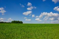 γεωργικά πεδία πράσινα στοκ εικόνες