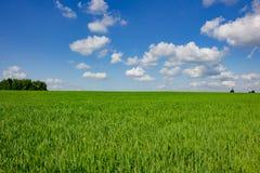 γεωργικά πεδία πράσινα στοκ φωτογραφία