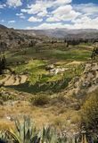 Γεωργικά πεζούλια Κοιλάδα Colca, Arequipa, Περού Στοκ Φωτογραφία