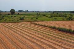γεωργικά πεδία Επαρχία Παβία, Ιταλία Στοκ Φωτογραφίες