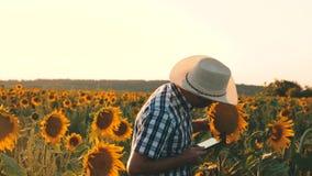 Γεωργική επιχειρησιακή έννοια περίπατοι αγροτών σε έναν ανθίζοντας τομέα λουλούδια και ηλίανθος ατόμων γεωπόνων osamatrivaet φιλμ μικρού μήκους