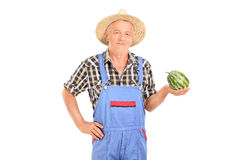 Γεωργικός εργαζόμενος που κρατά ένα μικροσκοπικό καρπούζι Στοκ εικόνα με δικαίωμα ελεύθερης χρήσης