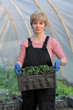 Γεωργικός εργαζόμενος σε ένα θερμοκήπιο με την τοματιά στοκ εικόνα με δικαίωμα ελεύθερης χρήσης
