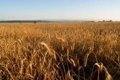 γεωργικό πεδίο φθινοπώρου Στοκ Φωτογραφίες