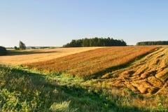 γεωργικό πεδίο φθινοπώρ&omicron Στοκ φωτογραφία με δικαίωμα ελεύθερης χρήσης