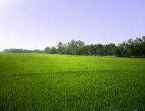 γεωργικό πεδίο Στοκ εικόνα με δικαίωμα ελεύθερης χρήσης