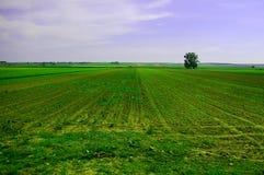 γεωργικό πεδίο Στοκ Φωτογραφία