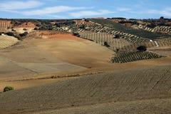 γεωργικό τοπίο Ισπανία της Ανδαλουσίας Στοκ Εικόνες