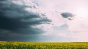 Γεωργικό τοπίο με τον ανθίζοντας ανθίζοντας συναπόσπορο, ελαιόσπορος στην εποχή λιβαδιών τομέων την άνοιξη Άνθος Canola φιλμ μικρού μήκους