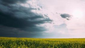 Γεωργικό τοπίο με τον ανθίζοντας ανθίζοντας συναπόσπορο, ελαιόσπορος στην εποχή λιβαδιών τομέων την άνοιξη Άνθος Canola απόθεμα βίντεο