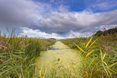 Γεωργικό τοπίο με το κανάλι με Duckweed στη Φρεισία, ΝΕ Στοκ φωτογραφία με δικαίωμα ελεύθερης χρήσης