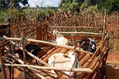 Γεωργικό τοπίο στην Τανζανία - την Αφρική Στοκ Εικόνες