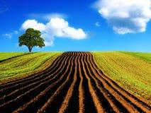 γεωργικό τοπίο στοκ εικόνα