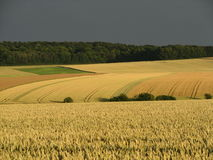 Γεωργικό τοπίο Στοκ εικόνα με δικαίωμα ελεύθερης χρήσης