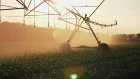 Γεωργικό cornfield ποτίσματος συστημάτων άρδευσης στο ηλιοβασίλεμα απόθεμα βίντεο