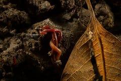 Γεωσκώληκες στο χώμα με τα ξηρά φύλλα Στοκ φωτογραφία με δικαίωμα ελεύθερης χρήσης