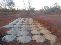Γεωλογικά δείγματα τρυπών τρυπανιών στον αυστραλιανό εσωτερικό στοκ εικόνα με δικαίωμα ελεύθερης χρήσης