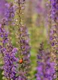 Γεύμα Ladybug Στοκ φωτογραφία με δικαίωμα ελεύθερης χρήσης