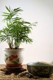 γεύμα zen στοκ φωτογραφία με δικαίωμα ελεύθερης χρήσης