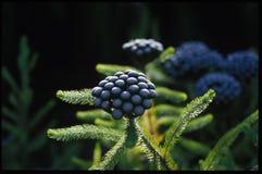 γηγενές φυτό Στοκ εικόνες με δικαίωμα ελεύθερης χρήσης