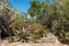 Γηγενής κήπος στο γλωσσικό μνημείο αφρικανολλανδικής σε Paarl στοκ φωτογραφία