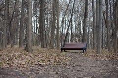 ΓΗΙΝΗ ΗΜΕΡΑ, κήπος της Μόσχας Neskuchny Στοκ εικόνες με δικαίωμα ελεύθερης χρήσης