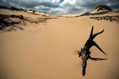 γη που καψαλίζεται Στοκ Εικόνες