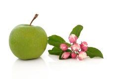 Γιαγιά Σμίθ μήλων Στοκ Φωτογραφίες