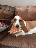 Γιατί μπορέστε ` τ έχω την πίτσα επίσης στοκ εικόνα