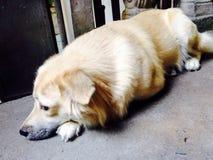 Γιατί τόσο χαριτωμένο φοντάν doggie;; Στοκ Φωτογραφίες
