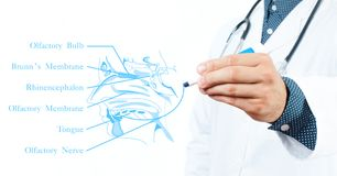 Γιατρός η έννοια βρίσκεται καθορισμένο στηθοσκόπιο χρημάτων ιατρικής Οσφρητικό σύστημα Στοκ Εικόνες