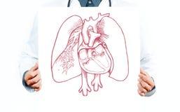 Γιατρός και ανατομικοί πνεύμονες Στοκ Φωτογραφία