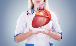 Γιατρός που κρατά τα ανθρώπινα όργανα & x28  heart& x29  , γκρίζο υπόβαθρο στοκ εικόνα