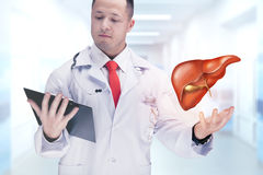 Γιατρός που κρατά τα ανθρώπινες όργανα και την ταμπλέτα σε ένα νοσοκομείο Υψηλή διάλυση Στοκ Εικόνες