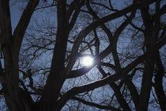Για να πιάσει το φεγγάρι Στοκ Φωτογραφία