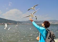 Για να ταΐσει seagulls Στοκ εικόνα με δικαίωμα ελεύθερης χρήσης