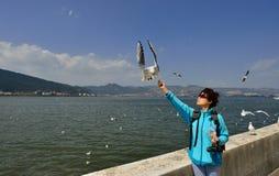 Για να ταΐσει seagulls Στοκ Φωτογραφίες